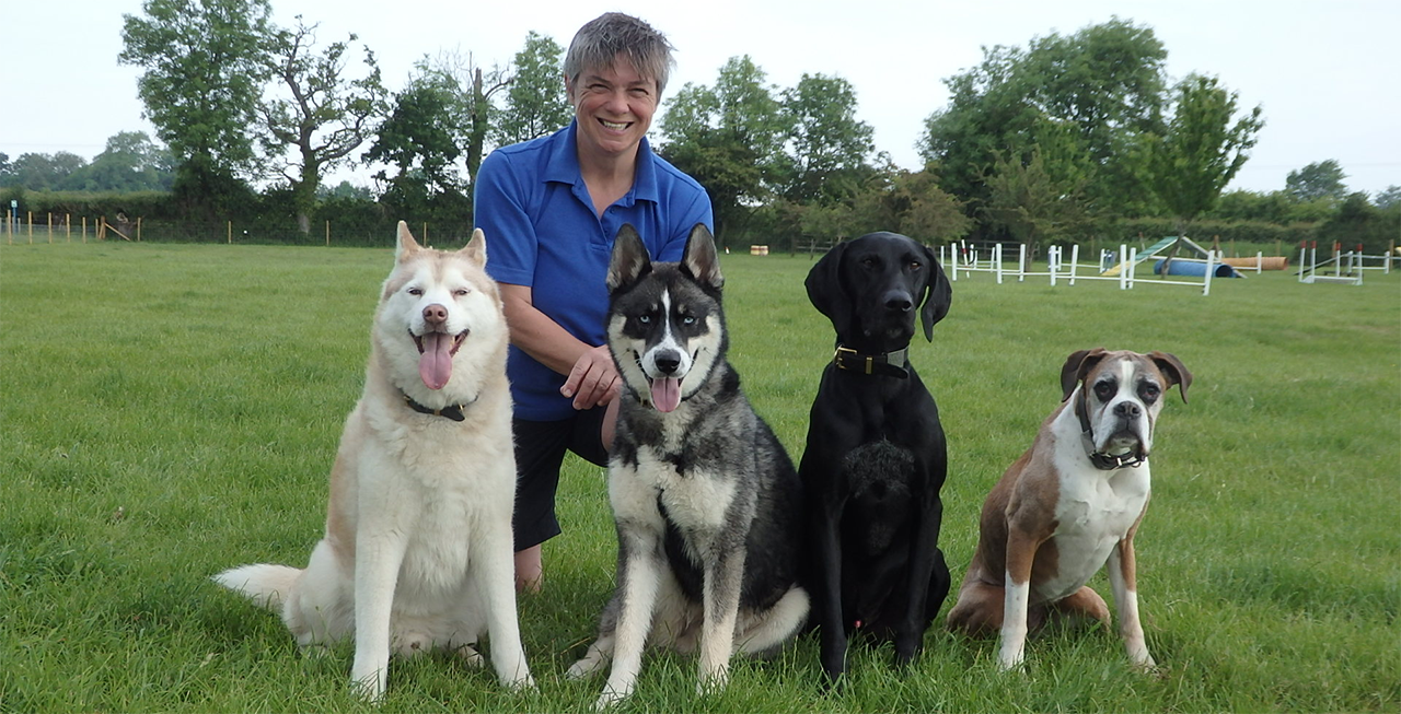 Ipo dog training uk milton keynes